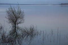 Трава озера Стоковое Изображение