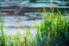 Трава около воды стоковая фотография