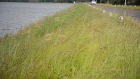 Трава около резервуара видеоматериал
