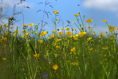Трава осветила теплое sunlit на луге лета, предпосылки конспекта естественные для вашего дизайна  Стоковое Изображение RF