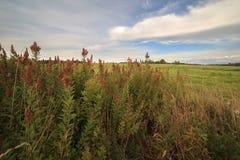 Трава осени в поле в солнечном дне Стоковая Фотография