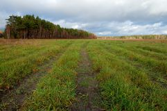 Трава осени и древесина Стоковое Изображение