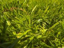 Трава отрезка зеленого цвета весной Стоковые Изображения