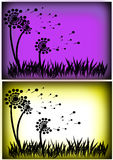 Трава одуванчика Стоковая Фотография