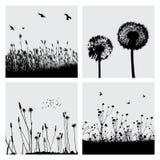 трава одуванчика Стоковые Изображения RF