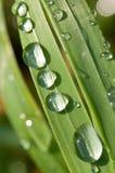 трава падений росы Стоковое Изображение