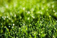 трава падений росы Стоковые Фото