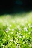 трава падений росы Стоковые Изображения RF