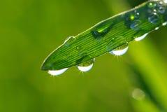 трава падений Стоковое Изображение