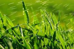 трава падений Стоковые Фото