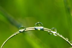 трава падений Стоковые Изображения RF
