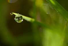 трава падения росы Стоковое Фото