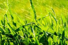 трава падения Стоковое Изображение