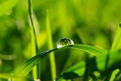 трава падения Стоковые Изображения RF