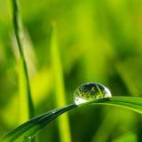 трава падения Стоковые Изображения