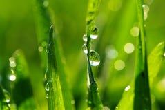 трава падения Стоковые Фотографии RF
