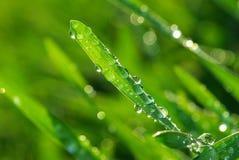 трава падения Стоковое фото RF