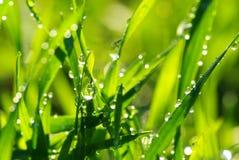 трава падения Стоковые Фото
