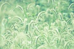 Трава Пампаса Стоковые Изображения RF