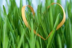 трава пасхи стоковые фотографии rf