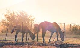 трава пася лошадей Стоковые Изображения