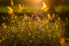 Трава перед заходом солнца Стоковое Изображение