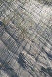 Трава песчанных дюн Стоковые Изображения RF