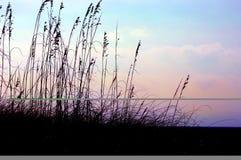 трава пляжа Стоковая Фотография RF