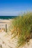 трава пляжа Стоковая Фотография
