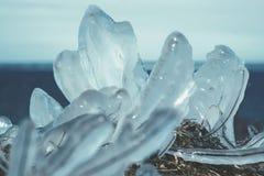 Трава под льдом - залив Финляндии Стоковая Фотография