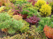 трава покрашенная предпосылкой Стоковое Фото