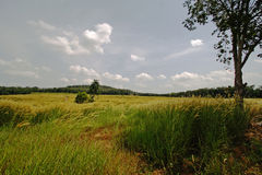 трава полей Стоковые Фото