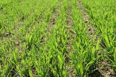 трава полей Стоковая Фотография RF