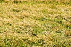 трава поля высокорослая Стоковая Фотография