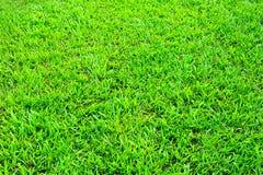 трава поля предпосылки Стоковая Фотография RF