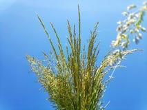 Трава поля против неба стоковые изображения rf