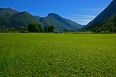 трава поля туриста стоковое фото rf