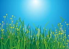 трава поля Стоковое Изображение