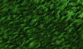 трава поля иллюстрация штока