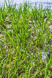 Трава поплавала Стоковое фото RF