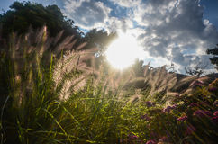 Трава полета в солнечном свете стоковое изображение rf