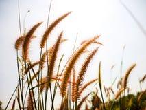 Трава полета на солнечном Стоковые Фотографии RF