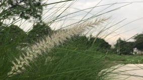 Трава полета разделенная в саде видеоматериал