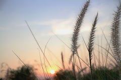 Трава полета Стоковое фото RF