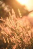 Трава полета Стоковое Изображение