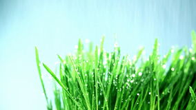 Трава под дождем сток-видео