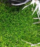 Трава полотенца Стоковое Изображение