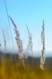 Трава поля на яркий солнечный день Стоковое фото RF