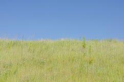 Трава поля против голубого неба Стоковое фото RF