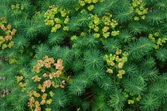 трава предпосылки зеленая Стоковое Изображение RF